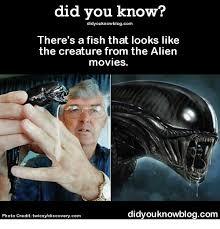 Alien Meme - 25 best memes about alien movie alien movie memes