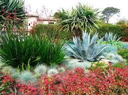 an eye catching succulent garden