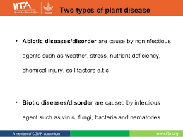 Types Of Plant Disease - common diseases of cassava and diseases assessment in west africa