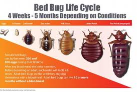 What Does Bed Bugs Look Like Biotherm Green Solutions Inc What Do Bed Bugs Look Like