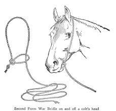 25 types horses ideas horse breeds