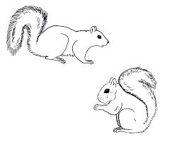 chuck does art coloring sheets grey squirrels