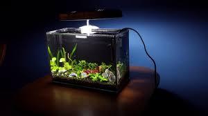 aquarium bureau aquarium bureau