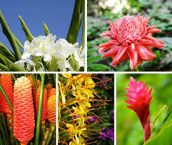 hawaiian flower buying guide from with our aloha