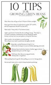 2136 best vegetable gardening images on pinterest gardening
