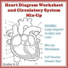 cardiovascular system diagram worksheet human anatomy chart