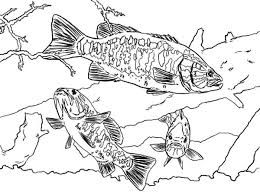 coloring pages about fish bass fish coloring pages picture