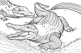 Dessin de coloriage Crocodile à imprimer  CP08828
