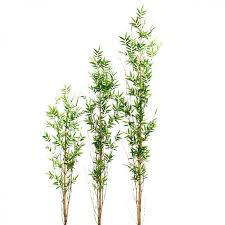 sorte de bambou tige de bambou entretien dootdadoo com u003d idées de conception