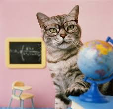 money lessons from cats what the family pet can teach your kids