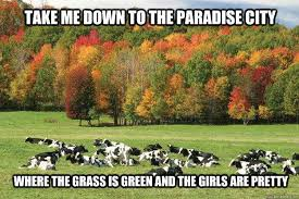 Farming Memes - dairy carrie answers tough questions for cow appreciation day
