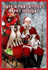 15 best italian greyhound dog christmas cards images on pinterest