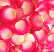 where can i buy petals 20 best petals images on wholesale roses pink