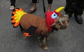 Yorkie Halloween Costumes 10 Costumes Prove Yorkshire Terriers Win Halloween