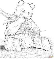 panda eat bamboo coloring page free printable coloring pages