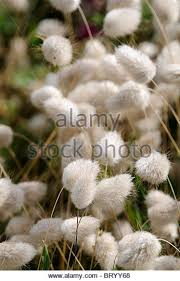 bunny stock photos bunny stock images alamy