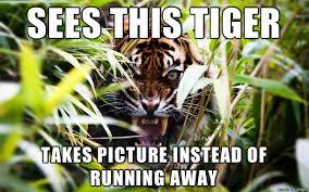 Tiger Meme - insanity tiger meme guy