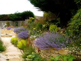 california native drought tolerant plants drought tolerant garden design cofisem co