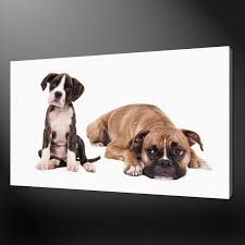 boxer dogs canvas wall art pictures prints variety of sizes free