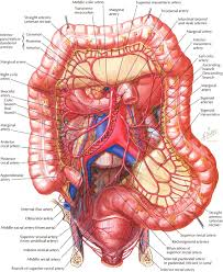 Human Anatomy Exam Questions Human Anatomy Function Of Large Intestine In Human Body Human