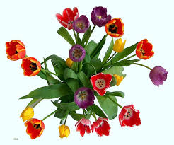 Real Flowers - 15 best flower arrangement gifts images on pinterest flower