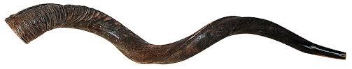 shofars for sale yemenite shofar