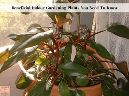 beneficial indoor gardening plants you need to know exotic gardening