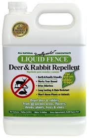 Rabbit Repellent For Gardens by 41 Best Deer U0026 Rabbit Repellent Images On Pinterest Rabbit