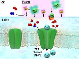novel insight into interaction between discharge plasma and cells