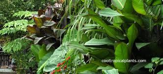 download tropical garden design adhome