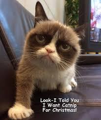Grumpy Meme Face - pretty 120 best grumpy cat meme by gary images on pinterest