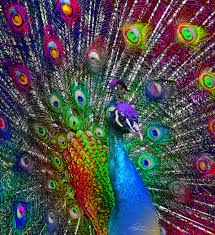 funmozar u2013 peacock home decor pinterest peacocks google