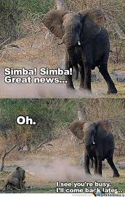 Lion King Memes - lion king memes best collection of funny lion king pictures