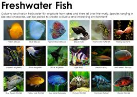 saltwater aquarium vs freshwater tank pros u0026 cons