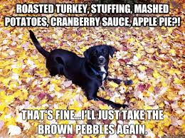 thanksgiving dinner is not for dogs my dogs