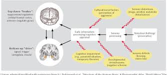 modification si e social figure 2 from neurobiology of aggression and violence semantic