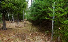 Minnesota forest images New vision for the north shore jpg