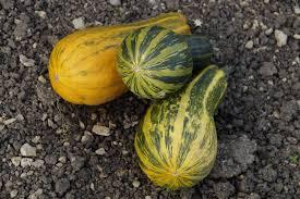 free images plant fruit produce vegetable autumn pumpkin