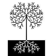 tree and root royalty free vector image vectorstock