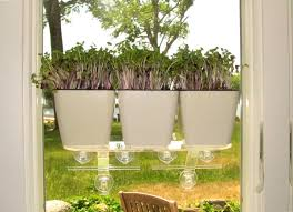 tiny gardens aquaphoric planter 10 tiny gardens you can grow on your