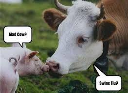 Funny Cow Memes - 43 most funniest cow memes images gifs pictures picsmine