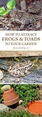 Natural Pesticides For Vegetable Gardens by How To Attract Frogs And Toads To Your Garden Insects Frogs And