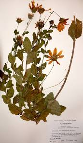 native plant society of texas 20 best plant specimens x rays images on pinterest plant