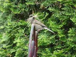 notes on backyard birding with a surprise u2013 fossils u0026 fauna