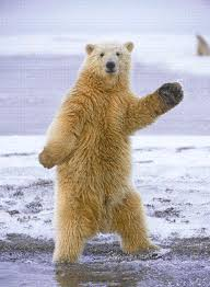 Dancing Bear Meme - dancing bear gif 7 gif images download