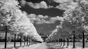 45 stocks at black and white image group