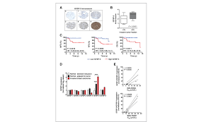igfbp ratio confers resistance to igf targeting and correlates