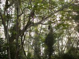 cross river gorilla species wwf