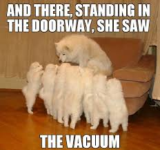 Benson Dog Meme - and there standing in the doorway she the vacuum funny dog meme picture