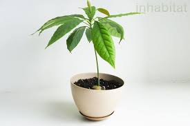growing trees from seeds which seeds work and which won t